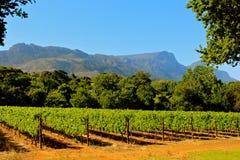 Имущество вина constantia Groot стоковые фото