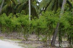 Имущество L'Union, Ла Digue, острова Сейшельских островов Стоковое фото RF