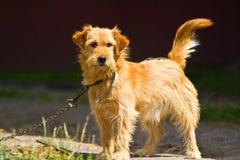 имя собаки Стоковые Фотографии RF