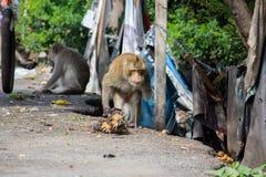 Инвалидность обезьяны имеет один идти руки Имейте бананы на поле стоковые изображения rf