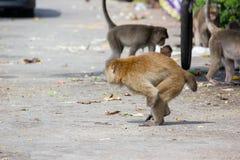 Инвалидность обезьяны имеет один идти руки стоковое изображение rf