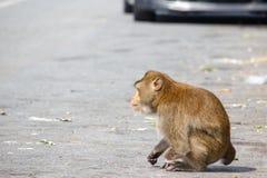 Инвалидность обезьяны имеет одну руку сидеть вниз с расплывчатой предпосылкой автомобиля стоковое изображение