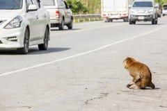 Инвалидность обезьяны подготовляет сидеть проселочной дорогой стоковые изображения rf