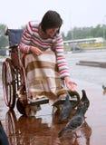 инвалидно Стоковые Фото