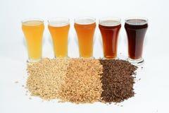 Ингридиенты домашнего пива зерен и хмелей Стоковое фото RF