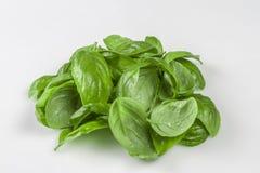 Ингридиент для салата Caprese Пук листьев травы базилика изолированных на белизне Стоковое Изображение