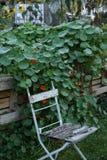 Индеец Gras в саде Стоковое Фото