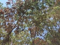 Индигенные деревья Стоковая Фотография