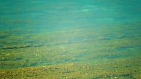 индийская вода текстуры солнца shine океана стоковая фотография rf
