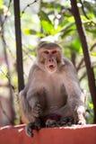 Индийская обезьяна сидя на для того чтобы обнести забором Rishikesh стоковые изображения rf