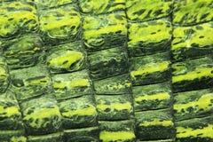 Индийская gavial деталь Стоковая Фотография