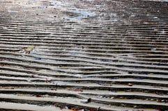 индийский низкий прилив океана Стоковое фото RF