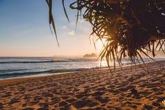 Индийский океан с пляжем, ладонями и заходом солнца острова Океан с цветами захода солнца Стоковое фото RF