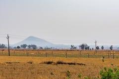 Индийский сельский огород на утре вокруг фермы падиа стоковое фото
