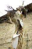 Индийский череп козы стоковые фотографии rf