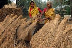 индийское село жизни Стоковое Изображение