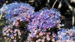 Индия Gokarna цветок предпосылки естественный Стоковое Изображение RF