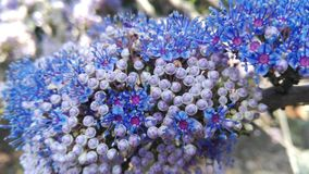 Индия Gokarna цветок предпосылки естественный Стоковое Фото