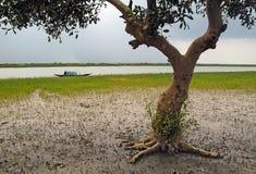 Индия sundarban Стоковое Изображение RF