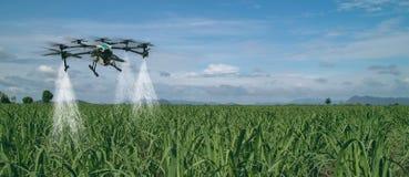 Индустрия 4 земледелия Iot умная 0 концепций, трутень в пользе фермы точности для брызга вода, удобрение или химикат к полю, стоковое изображение rf