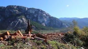 Индустрия леса машинного оборудования пиломатериала moving деревянная акции видеоматериалы