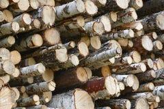 Индустрия тимберса в Финляндии Штабелированные деревья березы Backgrou природы Стоковая Фотография RF