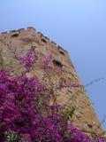 индюк башни alanya красный стоковые фото