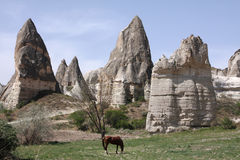 индюк лошади Стоковые Фотографии RF