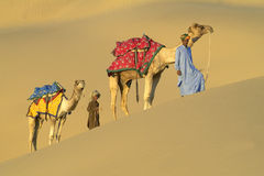 инец каравана 4 верблюдов Стоковые Фото