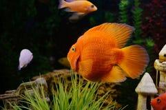линия белизна рыб чертежа аквариума черная Стоковые Изображения