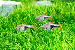 линия белизна рыб чертежа аквариума черная Стоковые Изображения RF