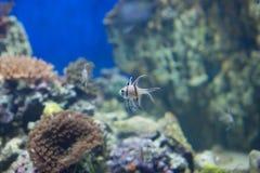 линия белизна рыб чертежа аквариума черная Стоковая Фотография