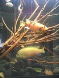 линия белизна рыб чертежа аквариума черная Стоковые Фотографии RF