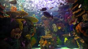 линия белизна рыб чертежа аквариума черная акции видеоматериалы