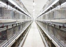 Инкубатор Chiken Стоковые Изображения RF