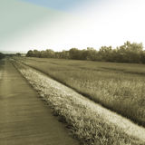 длинняя дорожка Стоковое Изображение