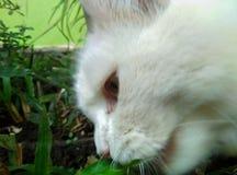 Иногда трава очень вкусна слишком стоковое фото rf