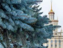 Институт сини елевый близко Стоковое Изображение RF