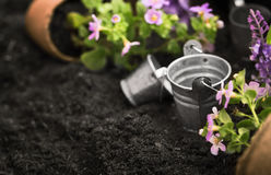 инструменты цветков садовничая стоковая фотография rf