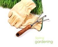 инструмент зеленого цвета травы перчаток сада Стоковые Фотографии RF