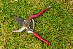 Инструмент плоскогубцев садовничая стоковые изображения rf