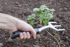 инструмент рынка руки садовника Стоковая Фотография