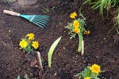 инструмент цветков садовничая Стоковое Фото