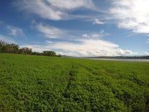 Интенсивное зеленое поле на озере Сан Roque в Сан Roque, Cordoba, Аргентине Стоковое Изображение RF