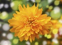 интенсивный желтый цвет Стоковое Изображение RF