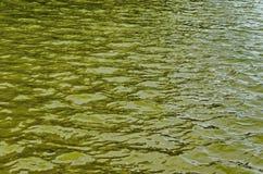 Интересная естественная предпосылка воды с отражением на озере в популярном северном парке, районе Vrabnitsa Стоковое Изображение