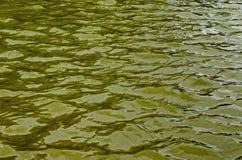 Интересная естественная предпосылка воды с отражением на озере в популярном северном парке, районе Vrabnitsa Стоковые Изображения RF