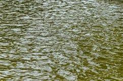 Интересная естественная предпосылка воды с отражением на озере в популярном северном парке, районе Vrabnitsa Стоковая Фотография RF