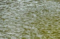Интересная естественная предпосылка воды с отражением на озере в популярном северном парке, районе Vrabnitsa Стоковые Фото