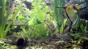 Интересное видео жизни рыб в заплывании аквариума и рыб акции видеоматериалы